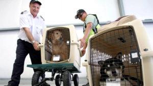 Аэрофлот перевозка животных